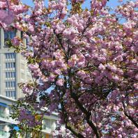 La tour de l'Hôtel de Ville depuis l'avenue Foch